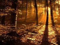 Пазлы онлайн. Картинка №69: Лесной закат . Размер картинки: 640х480