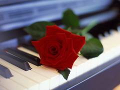 Пазлы онлайн. Картинка №690: Розовая симфония . Размер картинки: 640х480