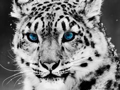 Пазлы онлайн. Картинка №735: Блондин с голубыми глазам . Размер картинки: 640х480