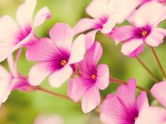 Пазлы онлайн. Картинка №741: Аромат весны . Размер картинки: 640х480