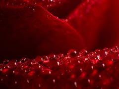 Пазлы онлайн. Картинка №792: Розовая икра . Размер картинки: 640х480