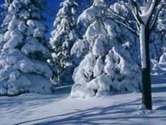 Пазлы онлайн. Картинка №80: Зимушка-зима . Размер картинки: 640х480
