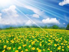 Пазлы онлайн. Картинка №811: Солнечная поляна . Размер картинки: 640х480