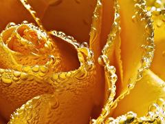 Пазлы онлайн. Картинка №816: Желтая волна . Размер картинки: 640х480