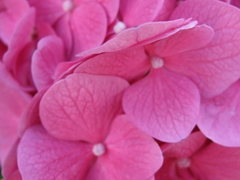 Пазлы онлайн. Картинка №820: Розовый ковер . Размер картинки: 640х480