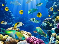 Пазлы онлайн. Картинка №827: Подводный мир . Размер картинки: 640х480