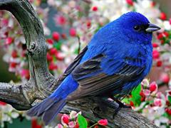 Пазлы онлайн. Картинка №828: Синяя птица . Размер картинки: 640х480
