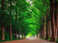 Пазлы онлайн. Картинка №829: Зеленая аллея  . Размер картинки: 640х480