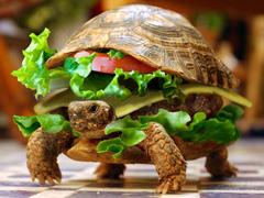 Пазлы онлайн. Картинка №839: Черепашбургер . Размер картинки: 640х480