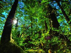 Пазлы онлайн. Картинка №866: Однажды в лесу . Размер картинки: 640х480
