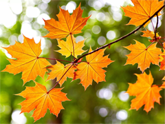 Пазлы онлайн. Картинка №896: Золотая осень . Размер картинки: 640х480