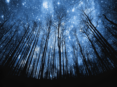 Пазлы онлайн. Картинка №915: Звёздная ночь . Размер картинки: 640х480