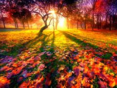 Пазлы онлайн. Картинка №923: Осеннее утро . Размер картинки: 640х480