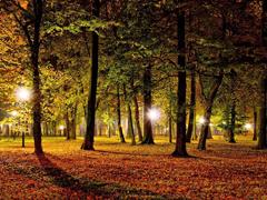 Пазлы онлайн. Картинка №970: Вечерняя осень . Размер картинки: 640х480