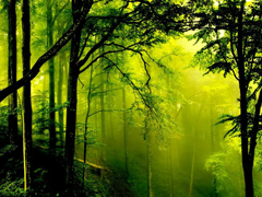 Пазлы онлайн. Картинка №986: Дремучий лес . Размер картинки: 640х480