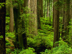Пазлы онлайн. Картинка №8: Лесной пейзаж . Размер картинки: 800х600