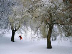 Пазлы онлайн. Картинка №10: Зимний лес . Размер картинки: 800х600