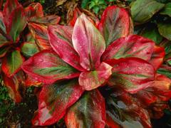 Пазлы онлайн. Картинка №12: Красное растение . Размер картинки: 640х480