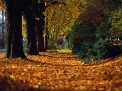 Пазлы онлайн. Картинка №13: Осенняя дорога . Размер картинки: 640х480