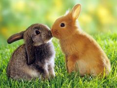 Пазлы онлайн. Картинка №137: Первый поцелуй . Размер картинки: 640х480