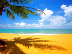 Пазлы онлайн. Картинка №173: Песчаный пляж . Размер картинки: 640х480