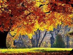 Пазлы онлайн. Картинка №209: Осеннее укрытие . Размер картинки: 640х480