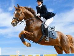 Пазлы онлайн. Картинка №255: Мой верный конь . Размер картинки: 640х480