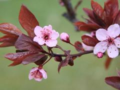 Пазлы онлайн. Картинка №285: Весеннее цветение . Размер картинки: 640х480