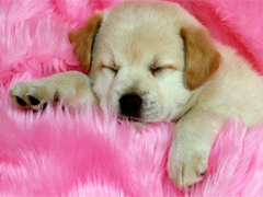 Пазлы онлайн. Картинка №30: Спящая красавица . Размер картинки: 800х600