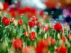 Пазлы онлайн. Картинка №303: Красное поле . Размер картинки: 640х480