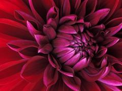 Пазлы онлайн. Картинка №320: Хищный цветок . Размер картинки: 640х480