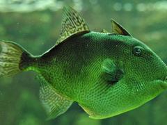 Пазлы онлайн. Картинка №343: Рыба - разведчик . Размер картинки: 640х480
