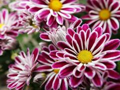 Пазлы онлайн. Картинка №348: Контрастные цветы . Размер картинки: 640х480