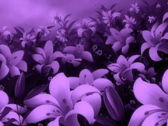 Пазлы онлайн. Картинка №376: Фиолетовый дурман . Размер картинки: 640х480