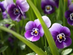 Пазлы онлайн. Картинка №383: Фиолетовая композиция . Размер картинки: 640х480