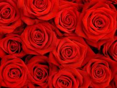 Пазлы онлайн. Картинка №400: Стена из роз . Размер картинки: 640х480