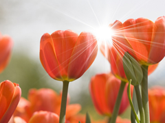 Пазлы онлайн. Картинка №401: Цветочный закат . Размер картинки: 640х480