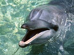 Пазлы онлайн. Картинка №403: Дельфинчик . Размер картинки: 640х480