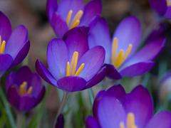 Пазлы онлайн. Картинка №404: Фиолетовая красота . Размер картинки: 640х480