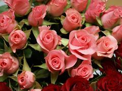 Пазлы онлайн. Картинка №414: Дикие розы . Размер картинки: 640х480