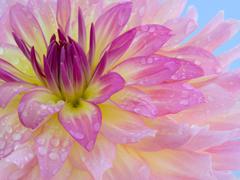 Пазлы онлайн. Картинка №418: Утренняя роса . Размер картинки: 640х480