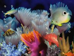 Пазлы онлайн. Картинка №43: Морской аквариум . Размер картинки: 640х480