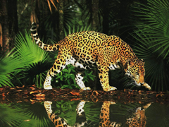 Пазлы онлайн. Картинка №44: Кресный отец джунглей . Размер картинки: 640х480