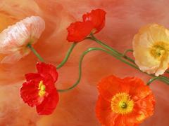 Пазлы онлайн. Картинка №442: Цветочная гирлянда . Размер картинки: 640х480