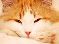 Пазлы онлайн. Картинка №459: Поели, а теперь поспать . Размер картинки: 640х480