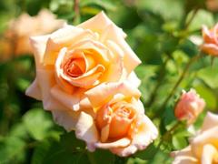 Пазлы онлайн. Картинка №461: Розовая фотомодель . Размер картинки: 640х480