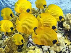 Пазлы онлайн. Картинка №483: Морские цыпы . Размер картинки: 640х480