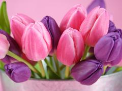 Пазлы онлайн. Картинка №526: Ведро тюльпанов . Размер картинки: 640х480