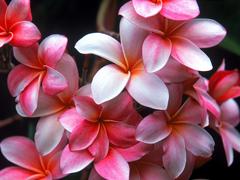 Пазлы онлайн. Картинка №54: Краснобелая прелесть . Размер картинки: 640х480
