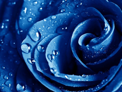 Пазлы онлайн. Картинка №540: Редкий цветок . Размер картинки: 640х480